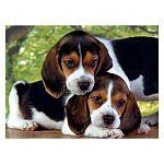 Clementoni High Quality Collection puzzle 500 db - Beagle kölykök (kép 2)
