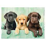 Clementoni High Quality Collection puzzle 1000 db - Labrador kölykök (kép 2)